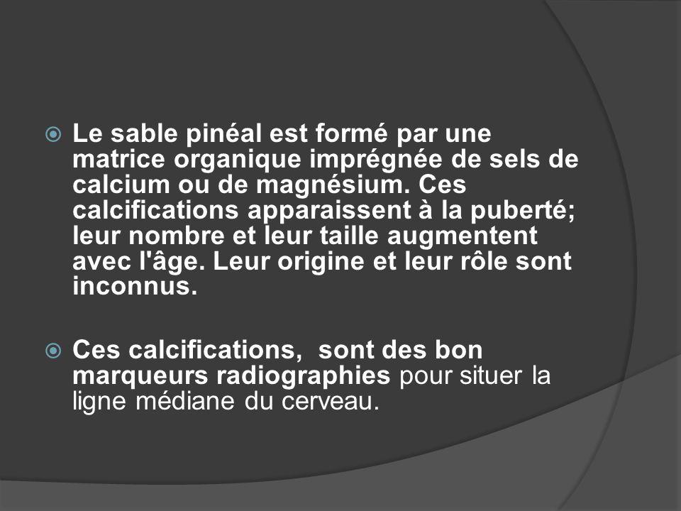 Le sable pinéal est formé par une matrice organique imprégnée de sels de calcium ou de magnésium. Ces calcifications apparaissent à la puberté; leur n