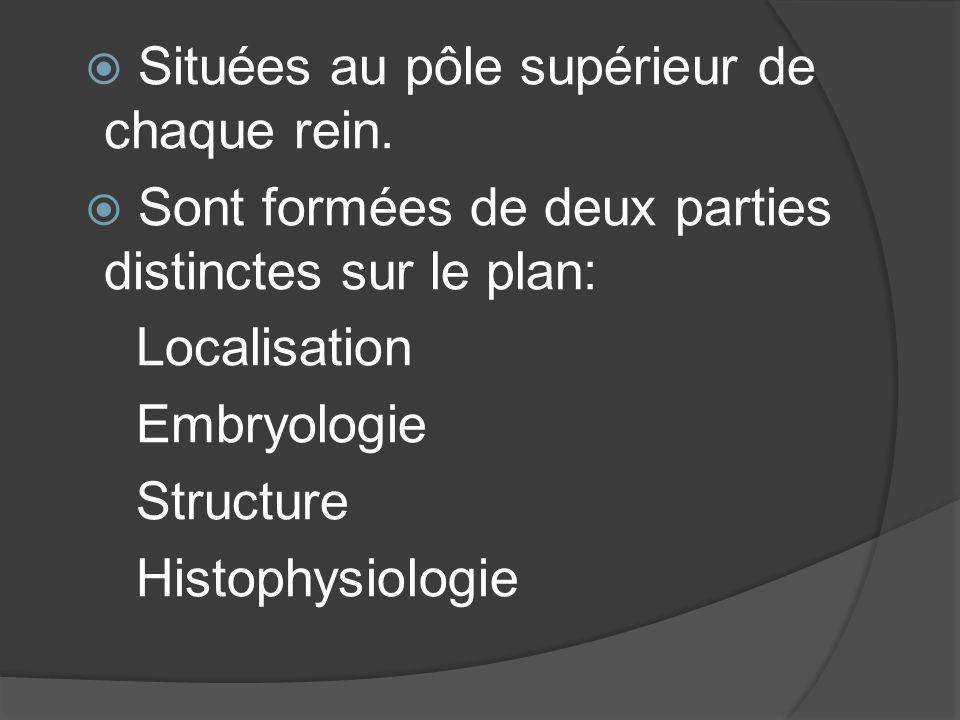Situées au pôle supérieur de chaque rein. Sont formées de deux parties distinctes sur le plan: Localisation Embryologie Structure Histophysiologie