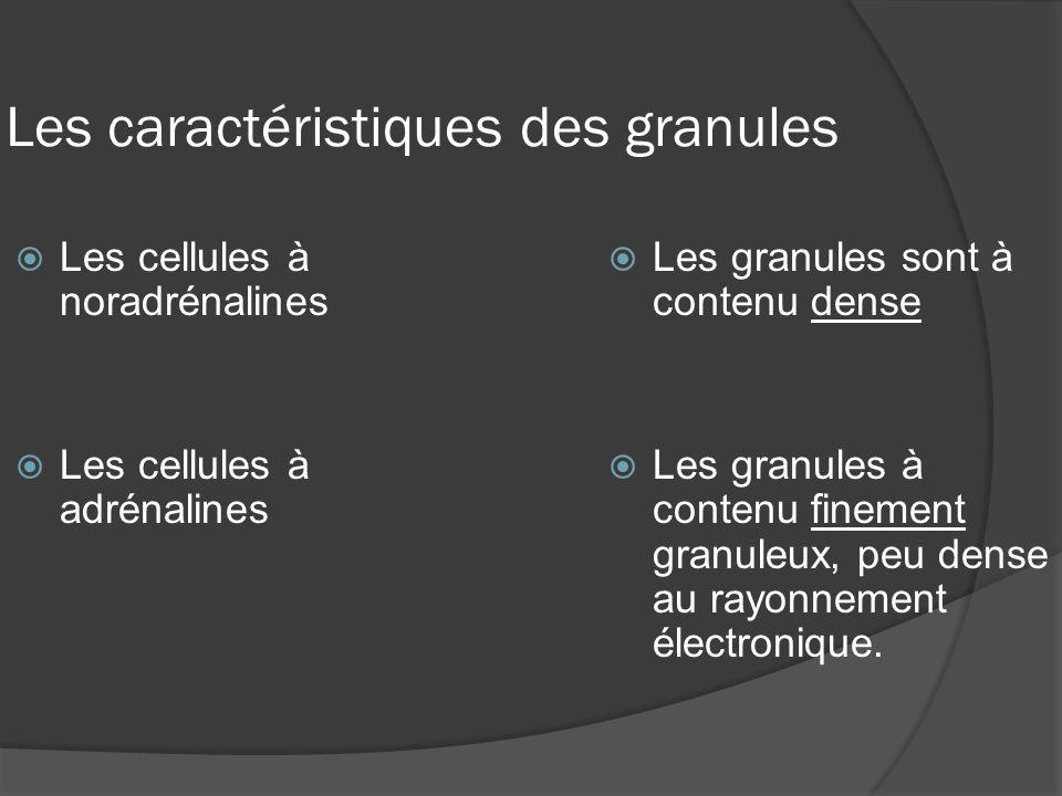 Les caractéristiques des granules Les cellules à noradrénalines Les cellules à adrénalines Les granules sont à contenu dense Les granules à contenu fi