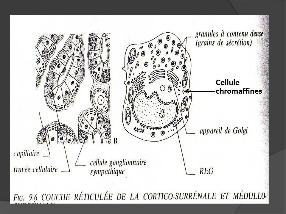 Cellule chromaffines