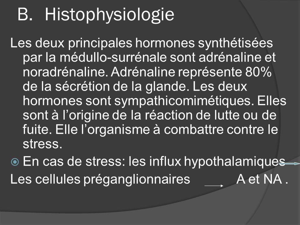 B.Histophysiologie Les deux principales hormones synthétisées par la médullo-surrénale sont adrénaline et noradrénaline. Adrénaline représente 80% de
