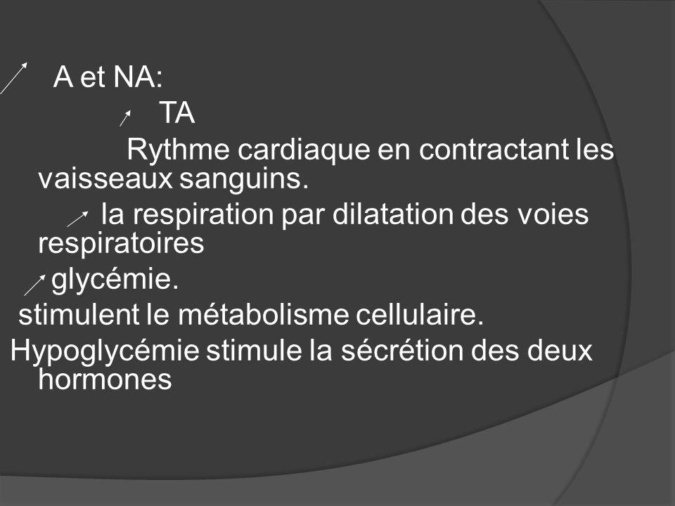 A et NA: TA Rythme cardiaque en contractant les vaisseaux sanguins. la respiration par dilatation des voies respiratoires glycémie. stimulent le métab