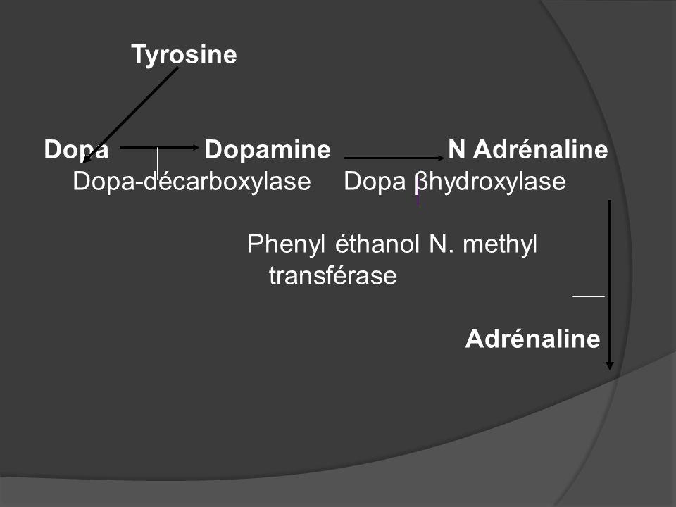 Tyrosine Dopa Dopamine N Adrénaline Dopa-décarboxylase Dopa βhydroxylase Phenyl éthanol N. methyl transférase Adrénaline