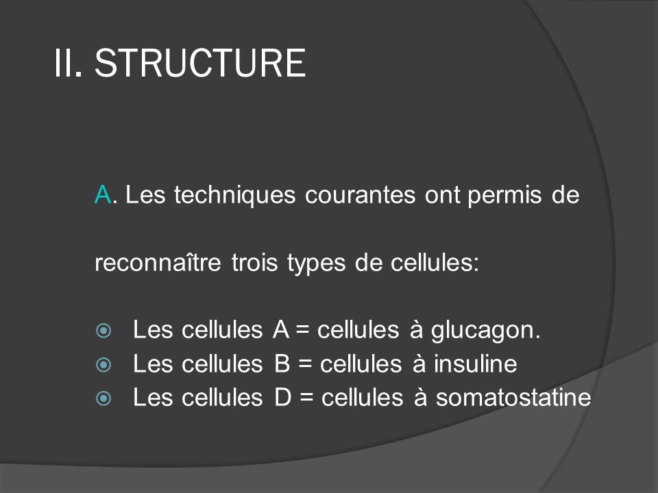 II. STRUCTURE A. Les techniques courantes ont permis de reconnaître trois types de cellules: Les cellules A = cellules à glucagon. Les cellules B = ce