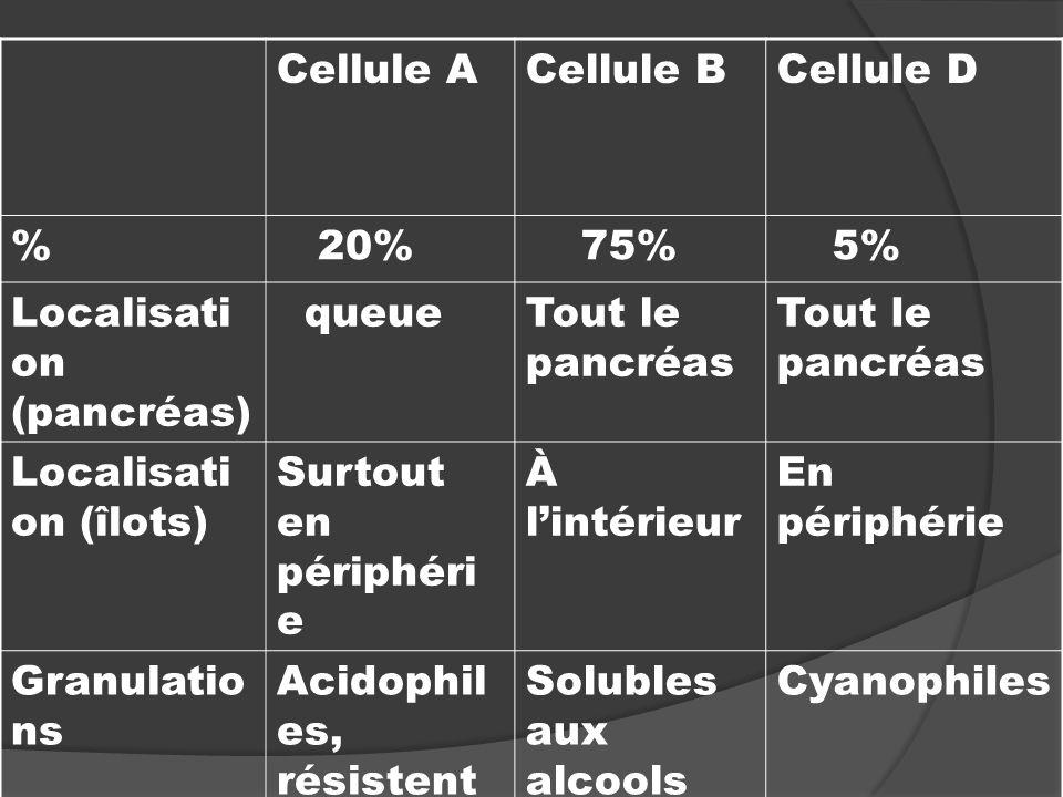 Cellule ACellule BCellule D % 20% 75% 5% Localisati on (pancréas) queueTout le pancréas Localisati on (îlots) Surtout en périphéri e À lintérieur En p