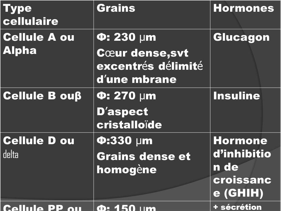 Type cellulaire GrainsHormones Cellule A ou Alpha Ф: 230 µ m C œ ur dense,svt excentr é s d é limit é d une mbrane Glucagon Cellule B ouβФ: 270 µ m D