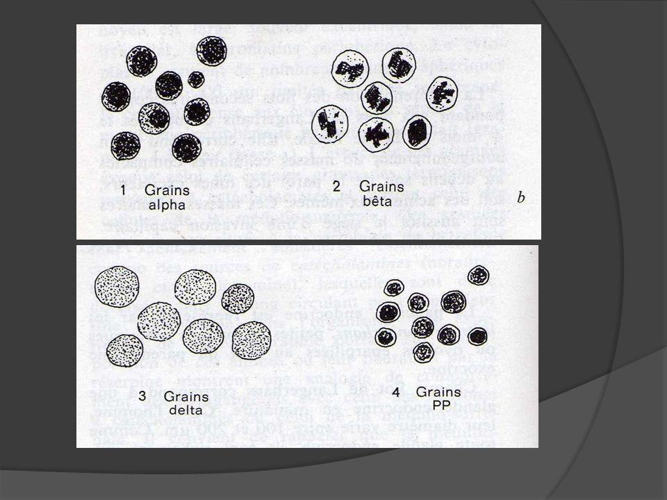 III.Histophysiologie Les deux hormones essentielles sont antagonistes dans leurs actions en agissant sur le métabolisme glucidique: Insuline favorise la pénétration intra-cellualaire du glucose sguin (sur les hépatocytes et les cellules musculaires).