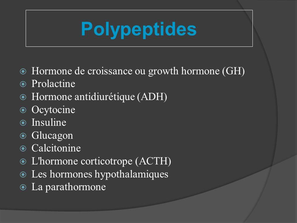 Polypeptides Hormone de croissance ou growth hormone (GH) Prolactine Hormone antidiurétique (ADH) Ocytocine Insuline Glucagon Calcitonine L'hormone co
