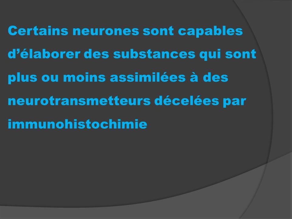 Certains neurones sont capables délaborer des substances qui sont plus ou moins assimilées à des neurotransmetteurs décelées par immunohistochimie