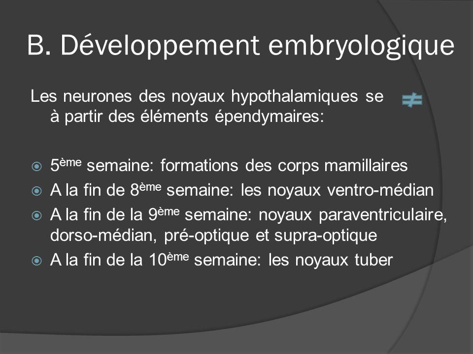 B. Développement embryologique Les neurones des noyaux hypothalamiques se à partir des éléments épendymaires: 5 ème semaine: formations des corps mami