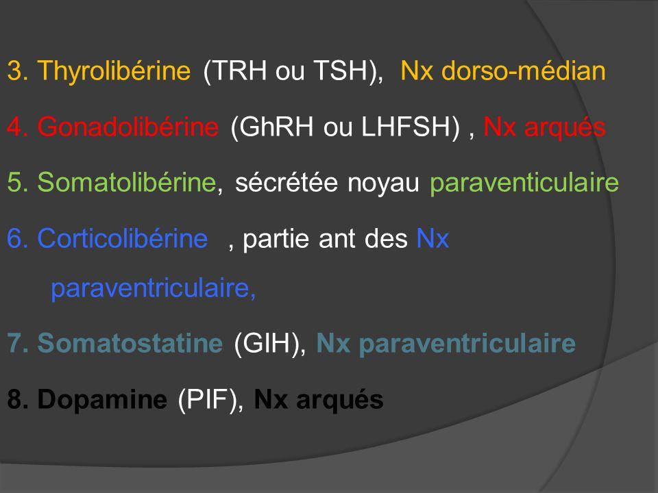 3. Thyrolibérine (TRH ou TSH), Nx dorso-médian 4. Gonadolibérine (GhRH ou LHFSH), Nx arqués 5. Somatolibérine, sécrétée noyau paraventiculaire 6. Cort