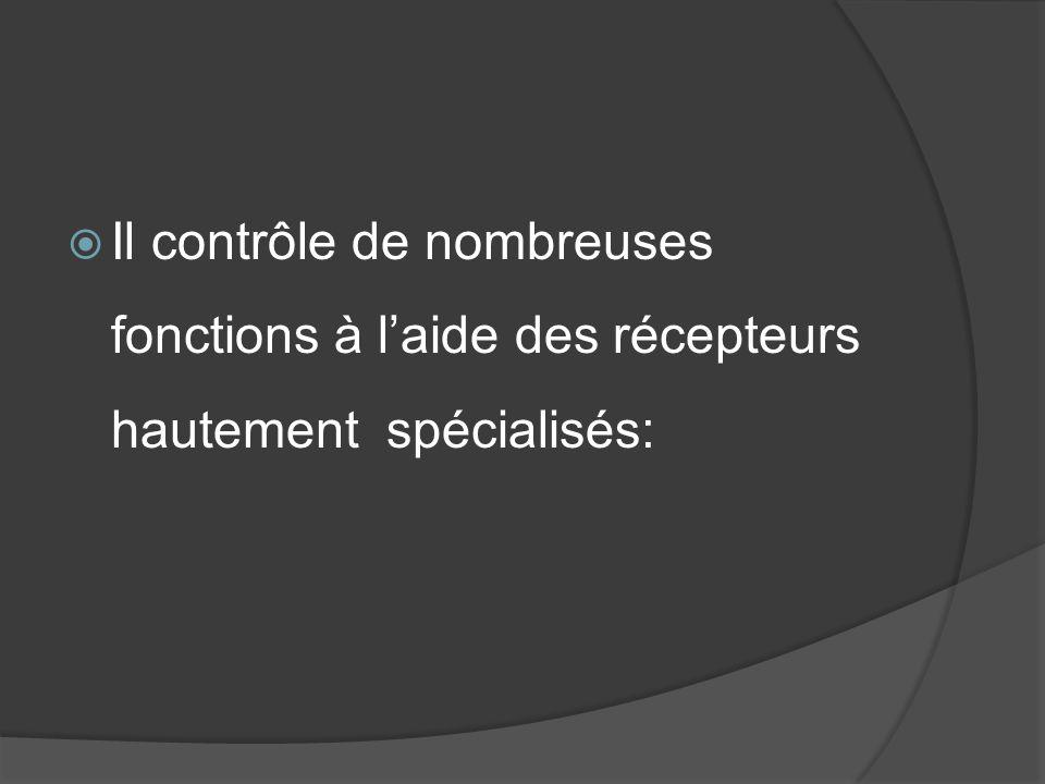 Il contrôle de nombreuses fonctions à laide des récepteurs hautement spécialisés: