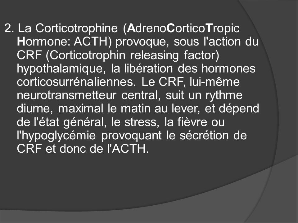 2. La Corticotrophine (AdrenoCorticoTropic Hormone: ACTH) provoque, sous l'action du CRF (Corticotrophin releasing factor) hypothalamique, la libérati