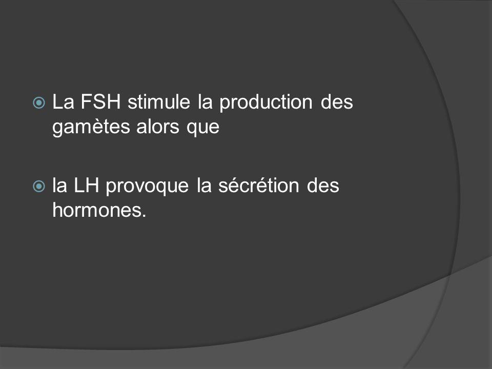 La FSH stimule la production des gamètes alors que la LH provoque la sécrétion des hormones.