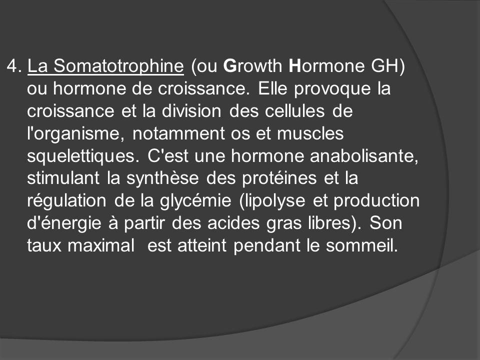 4. La Somatotrophine (ou Growth Hormone GH) ou hormone de croissance. Elle provoque la croissance et la division des cellules de l'organisme, notammen