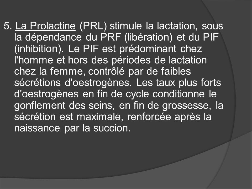 5. La Prolactine (PRL) stimule la lactation, sous la dépendance du PRF (libération) et du PIF (inhibition). Le PIF est prédominant chez l'homme et hor