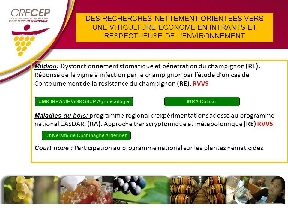 Mildiou : Dysfonctionnement stomatique et pénétration du champignon (RE).