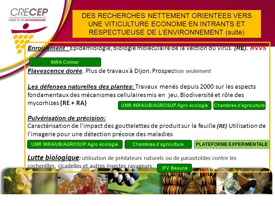 Enroulement : Epidémiologie, biologie moléculaire de la vection du virus.