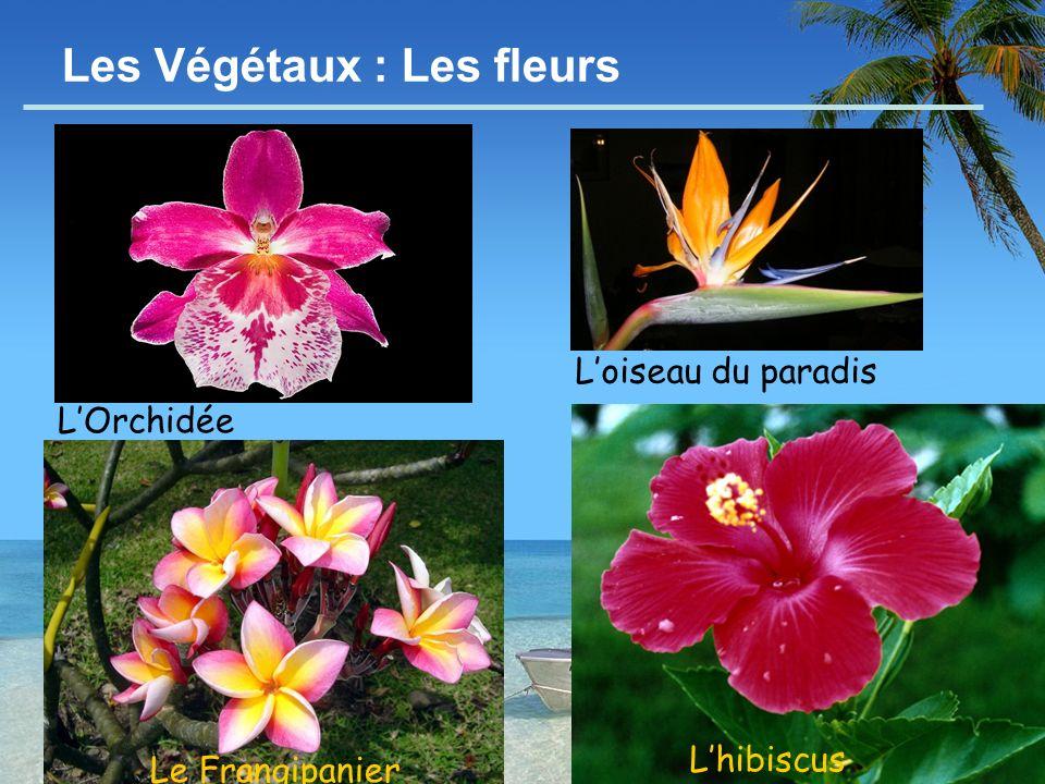 - 10 - Les Végétaux : Les fleurs Le Frangipanier Lhibiscus Loiseau du paradis LOrchidée