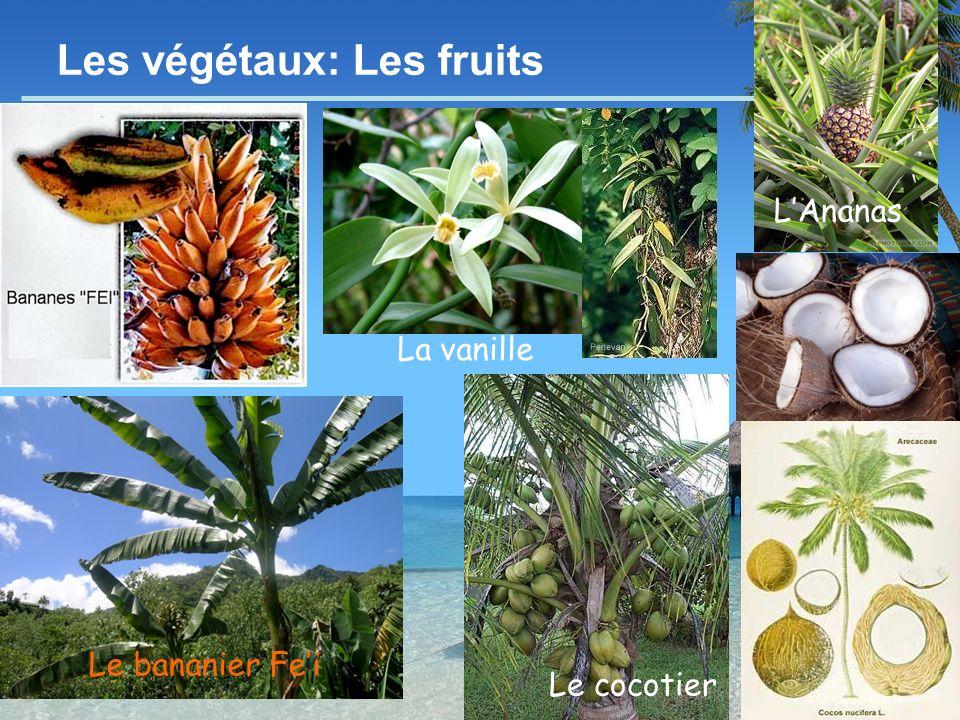 - 11 - Les végétaux: Les fruits LAnanas Le cocotier Le bananier Fei La vanille