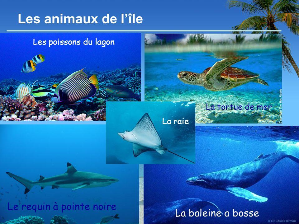 - 8 - Les animaux de lîle Le requin à pointe noire La baleine a bosse La tortue de mer Les poissons du lagon La raie