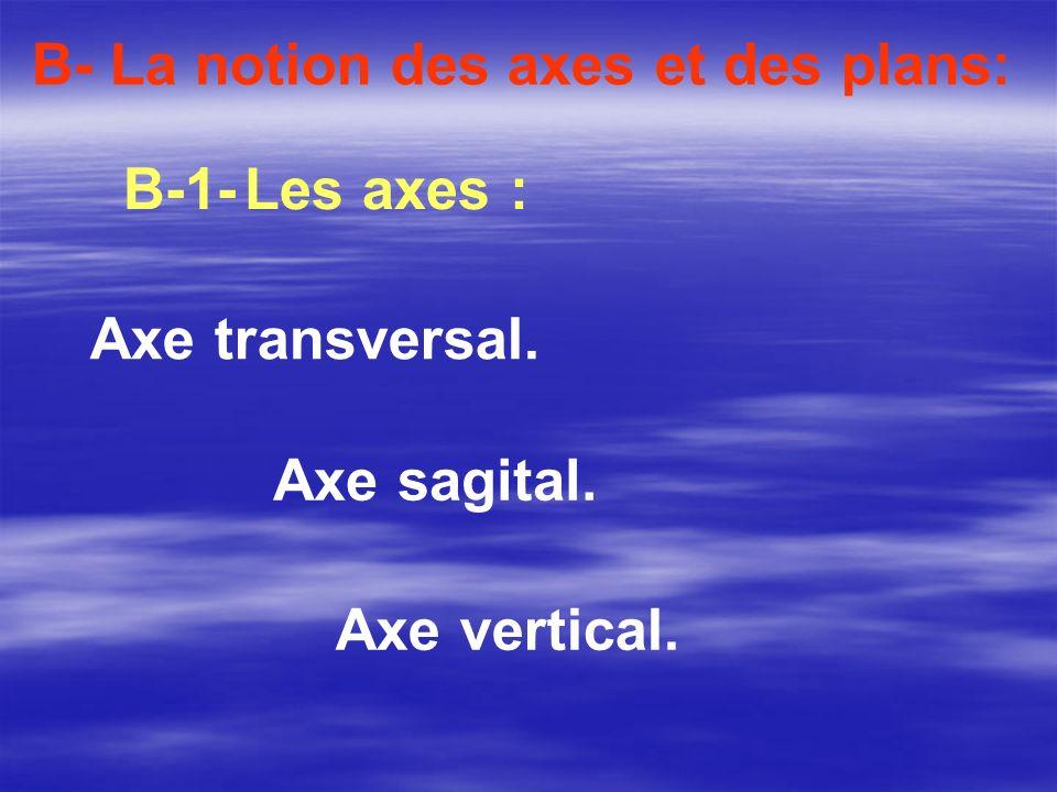 Axe vertical. B- La notion des axes et des plans: B-1- Les axes : Axe transversal. Axe sagital.