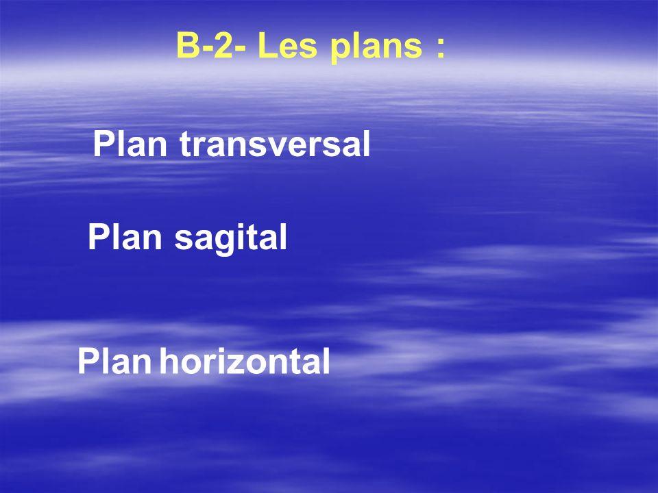 Plan horizontal B-2- Les plans : Plan transversal Plan sagital