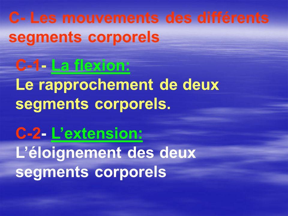 C-2- Lextension: Léloignement des deux segments corporels C- Les mouvements des différents segments corporels C-1- La flexion: Le rapprochement de deu