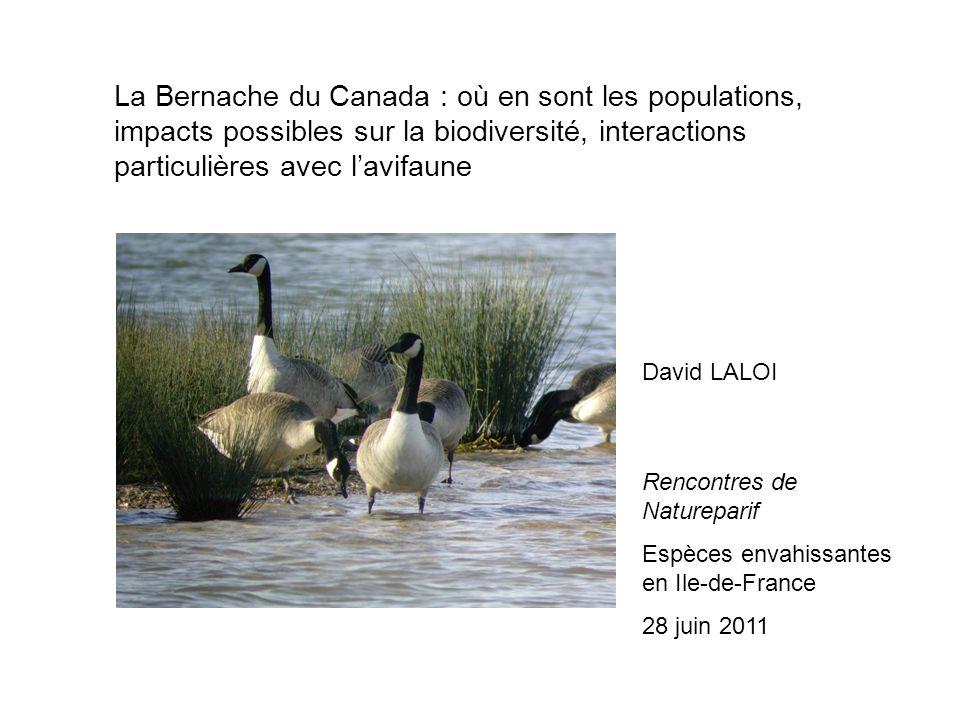 La Bernache du Canada : où en sont les populations, impacts possibles sur la biodiversité, interactions particulières avec lavifaune David LALOI Rencontres de Natureparif Espèces envahissantes en Ile-de-France 28 juin 2011