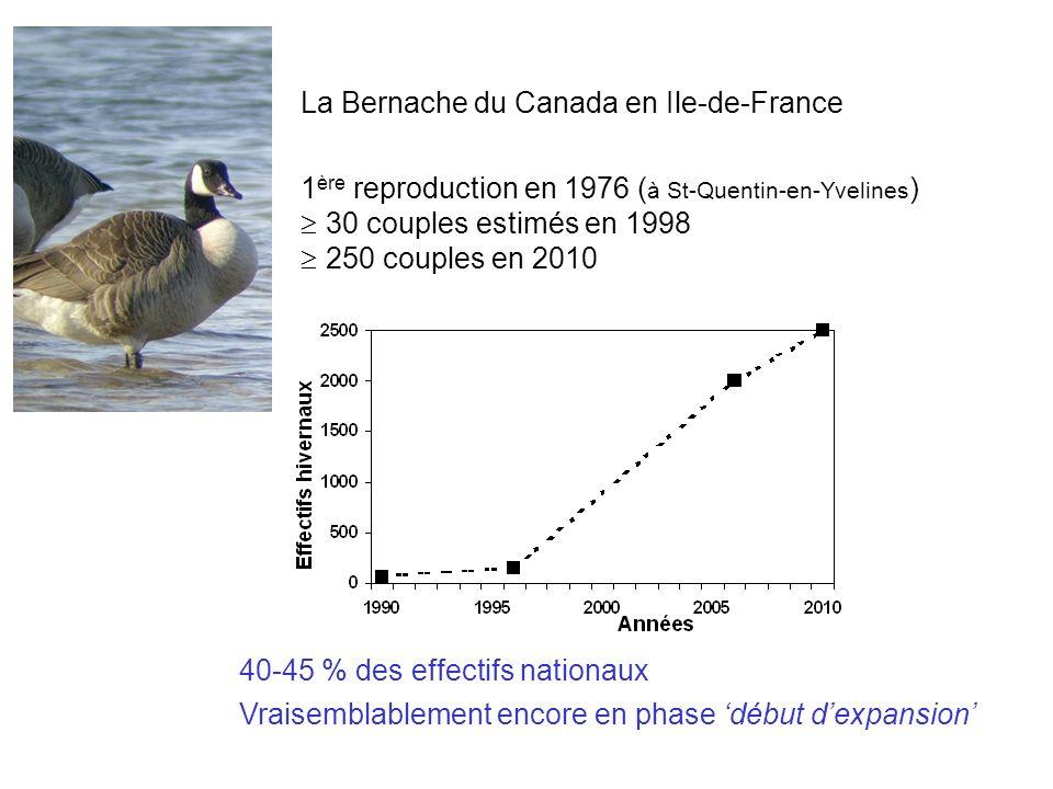 La Bernache du Canada en Ile-de-France 1 ère reproduction en 1976 ( à St-Quentin-en-Yvelines ) 30 couples estimés en 1998 250 couples en 2010 40-45 % des effectifs nationaux Vraisemblablement encore en phase début dexpansion