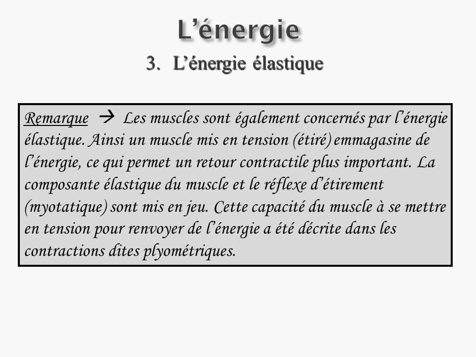 3.Lénergie élastique Remarque Les muscles sont également concernés par lénergie élastique.