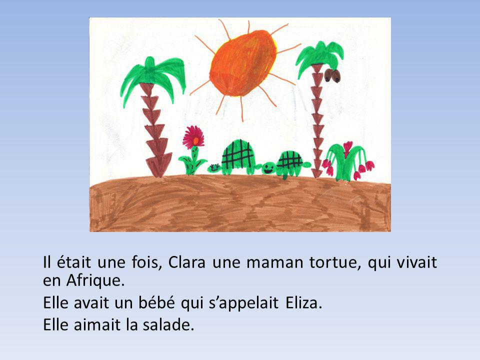 Il était une fois, Clara une maman tortue, qui vivait en Afrique. Elle avait un bébé qui sappelait Eliza. Elle aimait la salade.
