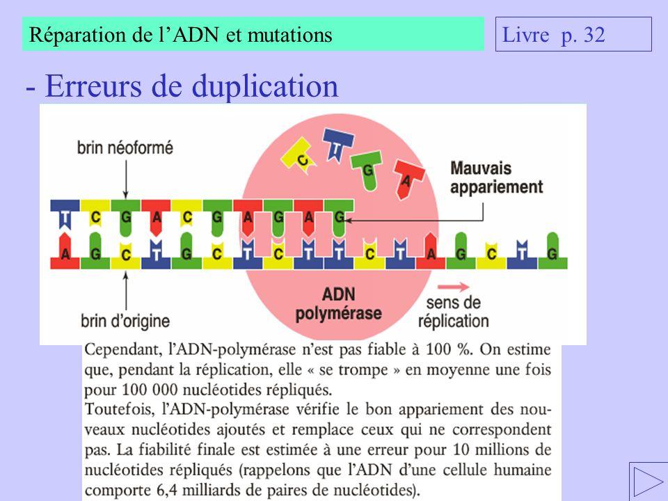 - Erreurs de duplication Livre p. 32 Réparation de lADN et mutations