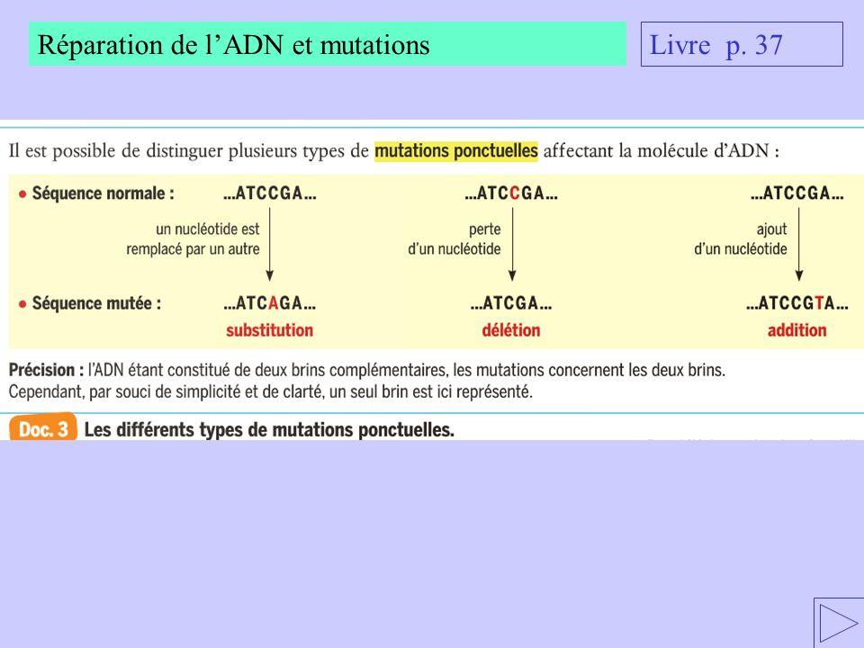 Réparation de lADN et mutations Livre p. 37