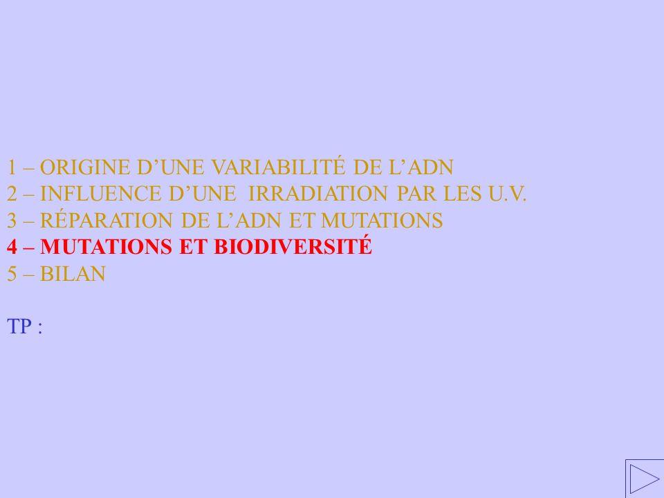1 – ORIGINE DUNE VARIABILITÉ DE LADN 2 – INFLUENCE DUNE IRRADIATION PAR LES U.V. 3 – RÉPARATION DE LADN ET MUTATIONS 4 – MUTATIONS ET BIODIVERSITÉ 5 –