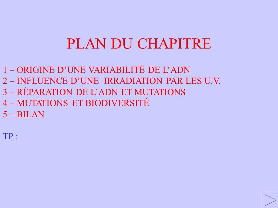 PLAN DU CHAPITRE 1 – ORIGINE DUNE VARIABILITÉ DE LADN 2 – INFLUENCE DUNE IRRADIATION PAR LES U.V. 3 – RÉPARATION DE LADN ET MUTATIONS 4 – MUTATIONS ET