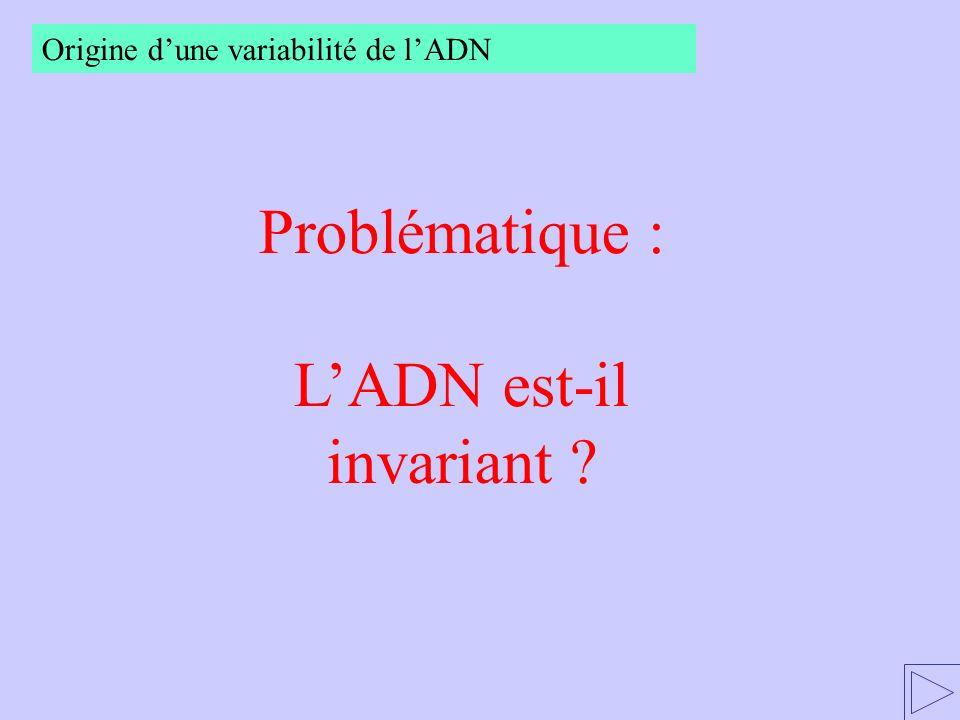 Problématique : LADN est-il invariant ? Origine dune variabilité de lADN
