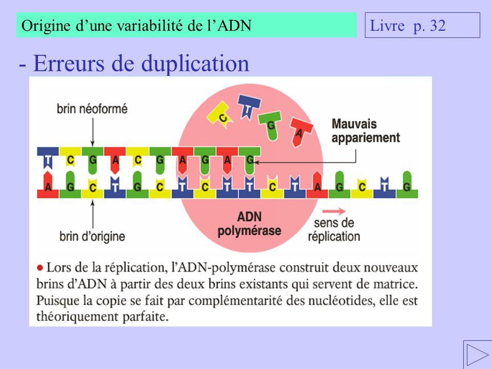 Origine dune variabilité de lADN - Erreurs de duplication Livre p. 32