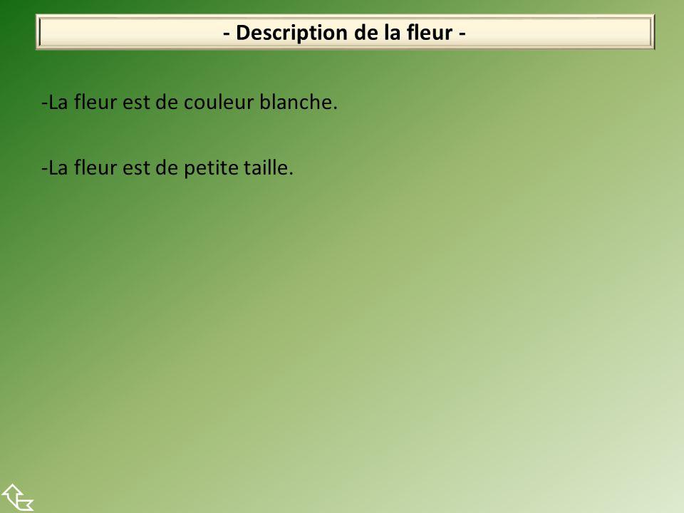 -La fleur est de couleur blanche. -La fleur est de petite taille. - Description de la fleur -