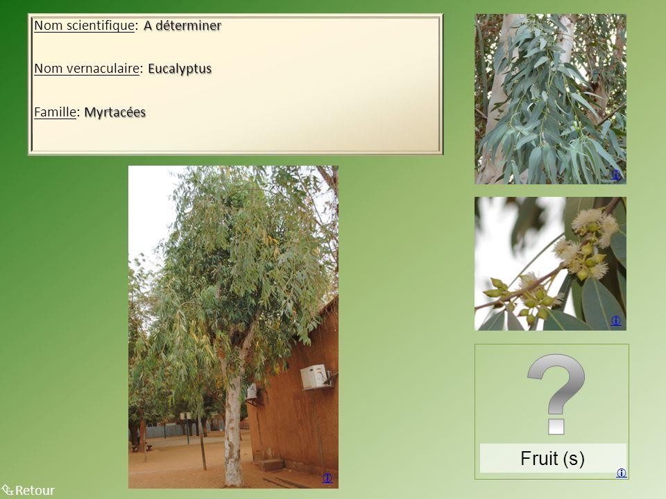 A déterminer Nom scientifique: A déterminer Eucalyptus Nom vernaculaire: Eucalyptus Myrtacées Famille: Myrtacées Retour Fruit (s)