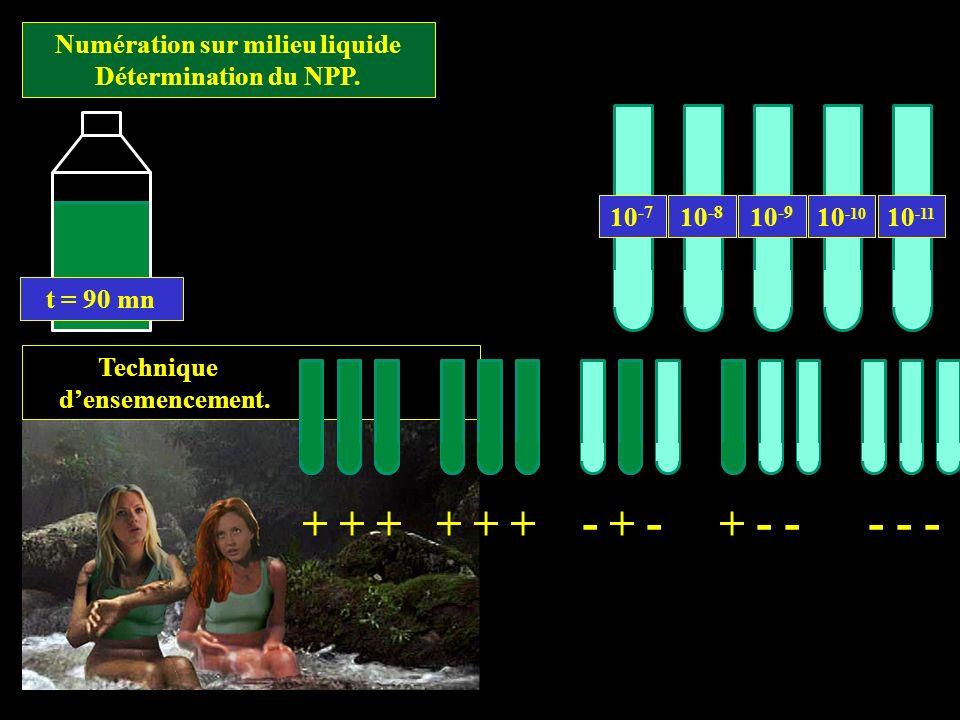 Technique densemencement. t = 90 mn Numération sur milieu liquide Détermination du NPP. 10 -7 10 -8 10 -10 10 -9 10 -11 + + + + + + - + - + - - - - -
