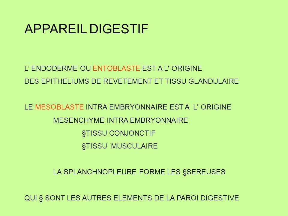 APPAREIL DIGESTIF tube digestif FERME AU DEPART PAR DEUX MEMBRANES: *** MEMBRANE PHARYNGIENNE SE RESORBE A 4° SEMAINE *** MEMBRANE CLOACALE SE RESORBE A 10° SEMAINE LE TUBE DIGESTIF COMMUNIQUE AVEC LA CAVITE AMNIOTIQUE
