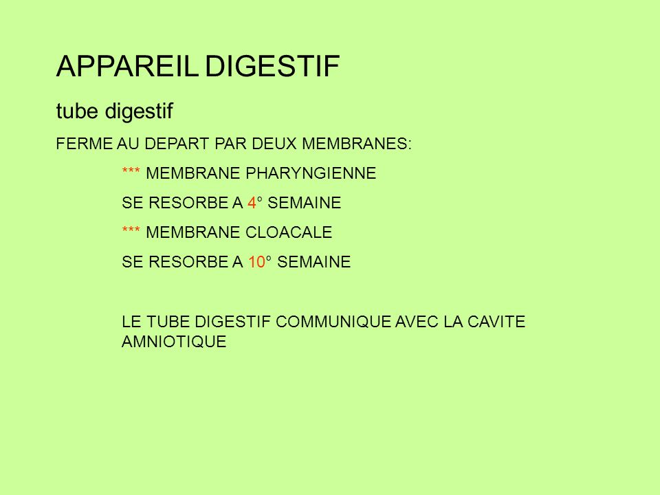 Tube cardiaque primitif qui reçoit Veines vitellines (près du tube digestif) Veines ombilicales