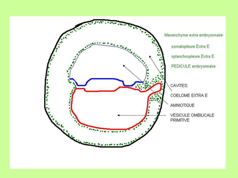 HILE du foie : à la face inférieure du foie arrivée de: - Artère hépatique ( branche du tronc cœliaque ) - Veine porte qui se divise en deux branches, D et G - La veine ombilicale G arrive au niveau de la branche G de la veine porte, à ce niveau donne le canal veineux dArantius - Canaux biliaires formant le canal hépatique qui va au cholédoque canald arantius veine ombilicale ARR AVT
