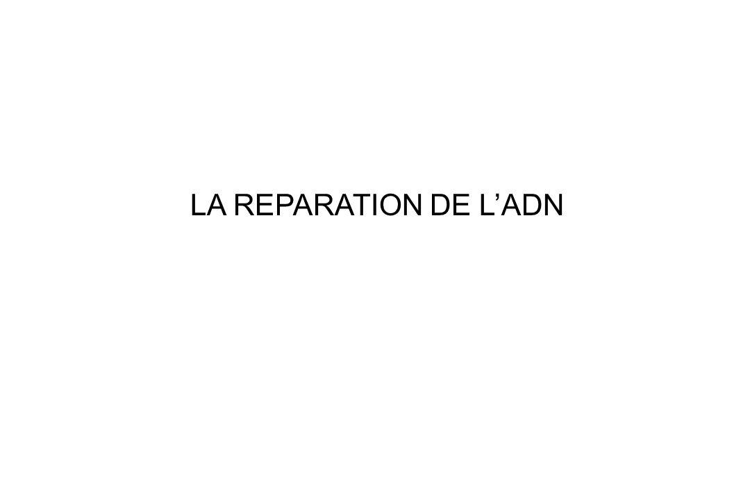 LA REPARATION DE LADN
