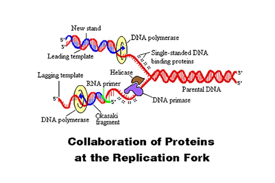 Types of DNA damage Gene, 250:15-30, 2000