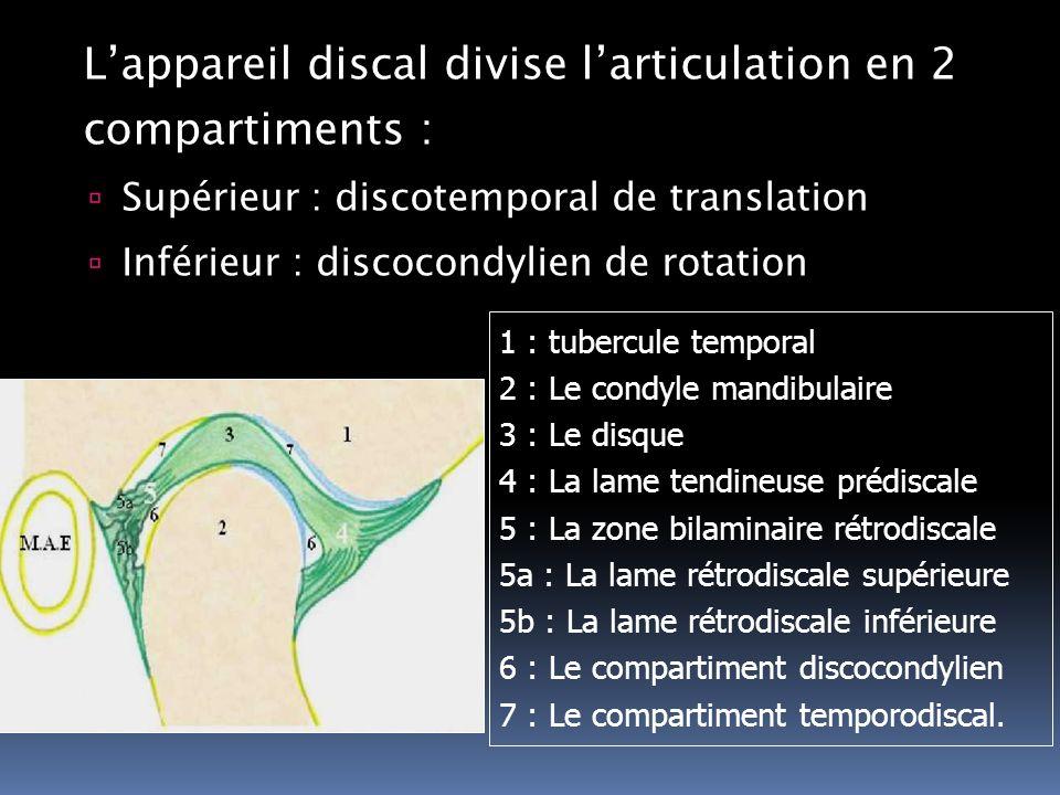 Lappareil discal divise larticulation en 2 compartiments : Supérieur : discotemporal de translation Inférieur : discocondylien de rotation 1 : tubercu