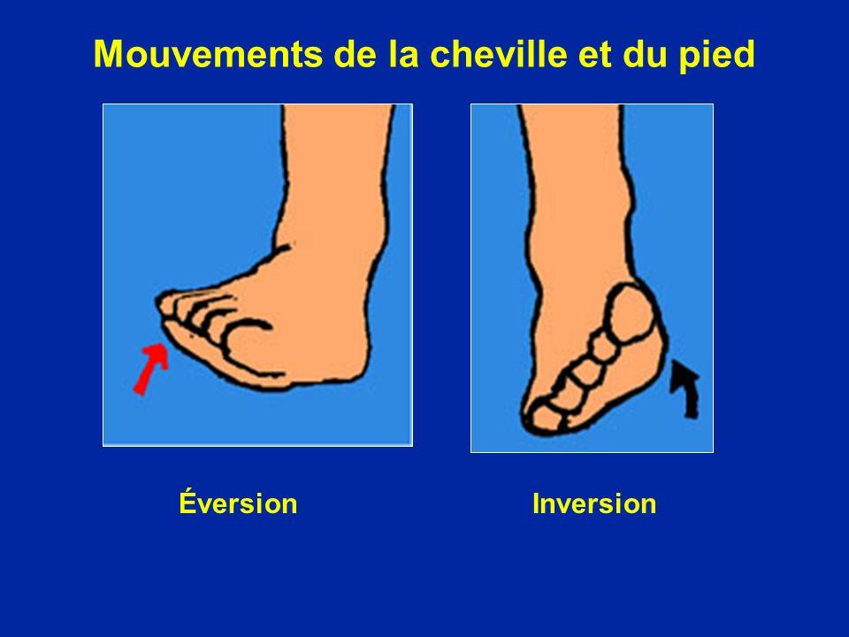 Mouvements de la cheville et du pied ÉversionInversion