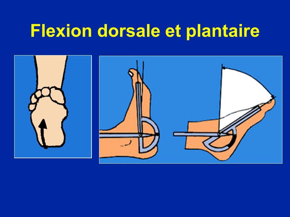 Flexion dorsale et plantaire