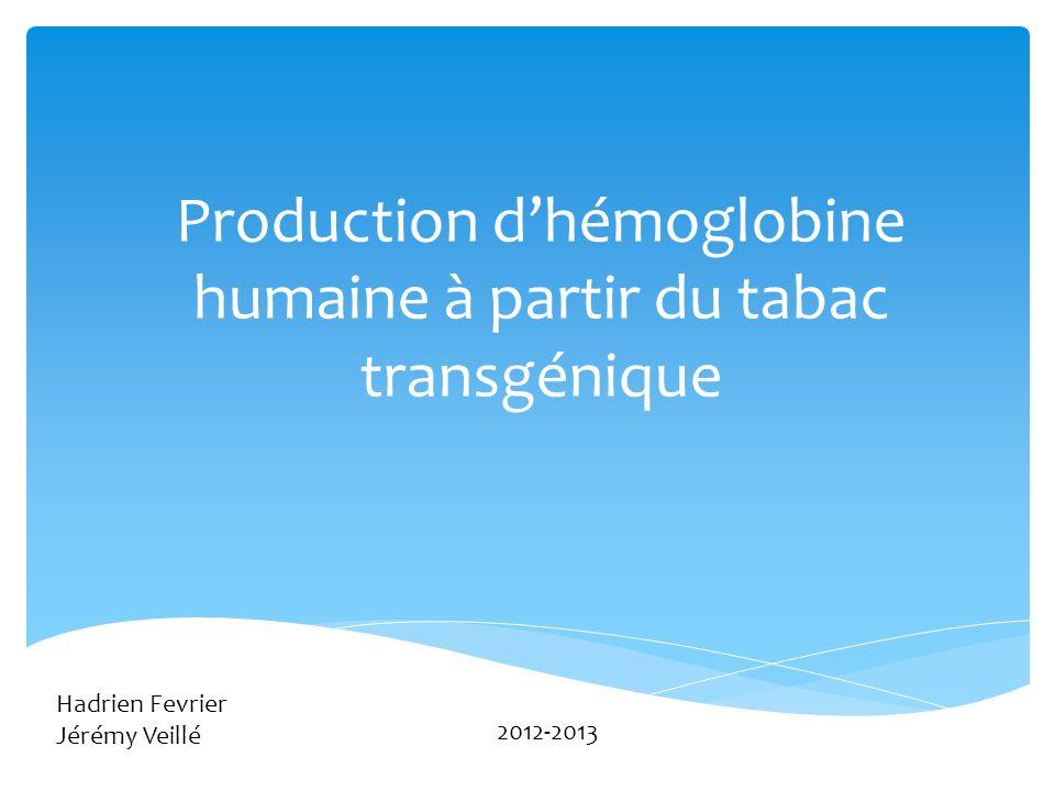 Production dhémoglobine humaine à partir du tabac transgénique 3 Hadrien Fevrier Jérémy Veillé 2012-2013
